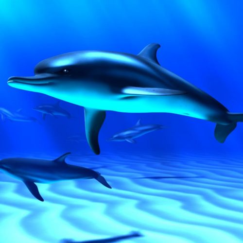 Locally Protected Marine Species Some: Do Marine Animals Need Protection From Noise? Science